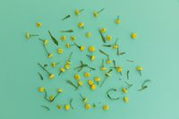 Multiple yellow flowers and leaves scattered on green background