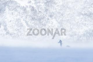 Skifahrer im Schneetreiben, Vistasdalen, Kebnekaisefjaell, Lappland