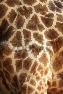 Close up of giraffe fur