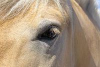 Pferdeauge.jpg
