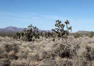 Kaktus Pflanzen