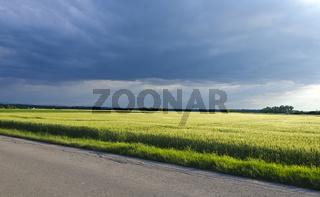 Gewitterwolken über Weizenfeld