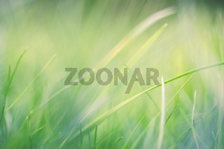 Fresh grass with very shallow DOF as background