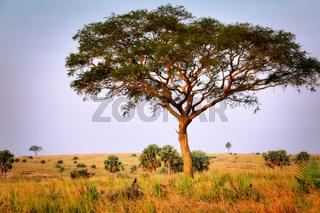 Landschaft im Murchison Falls Nationalpark Uganda | Landscape at Murchison Falls National Park Uganda