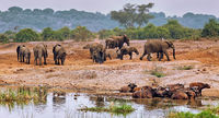 Elefanten im Queen Elizabeth Nationalpark, Kazinga-Kanal, Uganda (Loxodonta africana) | Elephants, Queen Elizabeth National Park, Kazinga Channel, Uganda (Loxodonta africana)