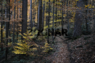 Suedschwarzwald im Herbst