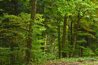 Herbstwald im Oktober