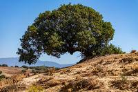 Baum in Andalusien