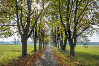 Tree Allee with sun in autumn