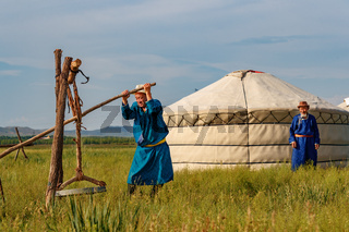 Traditionally dressed old Mongolian men process the fur of sheep in a traditional way