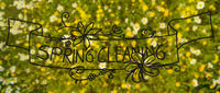 Daisy And Yellow Flower Meadow, Calligraphy And Illustration Spring Cleaning