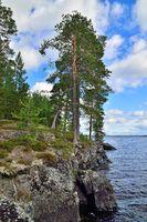 Karelian landscape - rocks, pine trees and water. Lake Keret, Northern Karelia, Russia