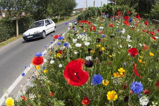 Blumenwiese-auf-Verkehrsinsel
