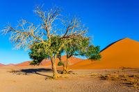 Little tree in the Namib Desert