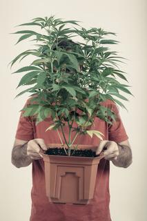 Man holding Cannabis pot