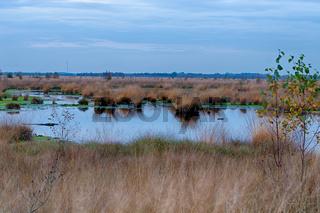 Naturaufnahmen im Diepholzer Moor
