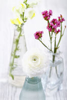 Fresh flowers in glass vases