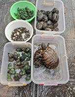 Hanoi, Vietnam - February 26, 2020: various turtles for sale on a street market in Vietnam