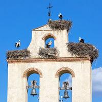 Störche auf dem Glockenturm einer Kirche in Avila, Spanien