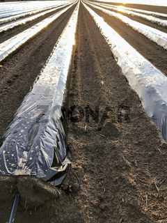 polytunnel plantation