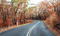 Curving road through buirnt bush land in Australia