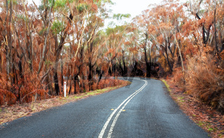 Curving road through buirnt bush land in Australia