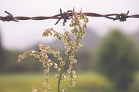 Close up of a barbed wire with a soft background
