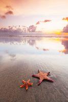 Two starfish on sea beach