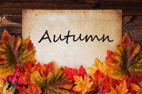 Old Paper With Text Autumn, Colorful Leaves Decoration