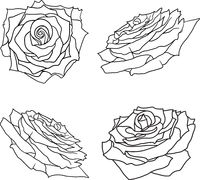 Beautiful set sketch of a rose flower on a white background