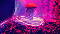 Mushrooms and plants illuminated by inert gas