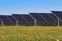 Solar Panels on Sunny Flower Field