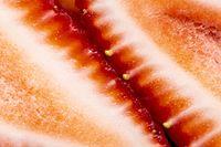 Macro Close Up Fruit