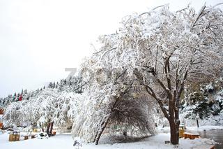 Snow falls at huanglong, china.jpg