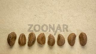 Brazilian nuts on a handmade paper
