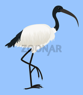 Cartoon vector icon of ibis bird isolated on blue