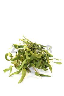 grüner Mistelzweig mit Beeren