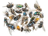 Viele verschieden tote Insekten liegen auf einem Haufen. Freigestellt auf weiß