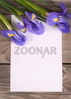 Blue irises on wooden boards