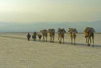 Dromedar-Karawane auf dem Assale Salzsee in der Abenddämmerung, Afar Region, Äthiopien