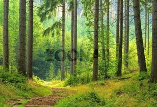 Wald - forest 40