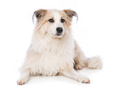Cute dog lying on white background