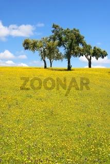 Wiese - meadow 26