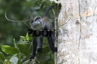 blue monkey sitting near the trunk of a large tree