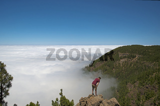 Kiefernwald, Kanarische Kiefer (Pinus canariensis), Passatwolken, Teide-Nationalpark, Weltnaturerbe, Teneriffa, Kanaren, Spanien, Europa
