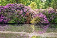 Tiergarten 021. Deutschland