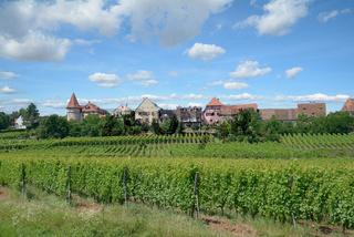 Weinort Zellenberg in Grand Est region(vormals Elsass),Frankreich