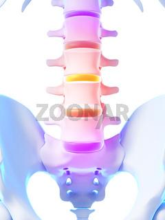 3d rendered illustration - intervertebral disks