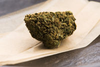 Cannabis sativa flower buds, cbd