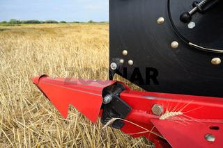 Bei der Ernte von Getreide